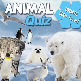Gioca a Animal Quiz  🕹️ 🏖️